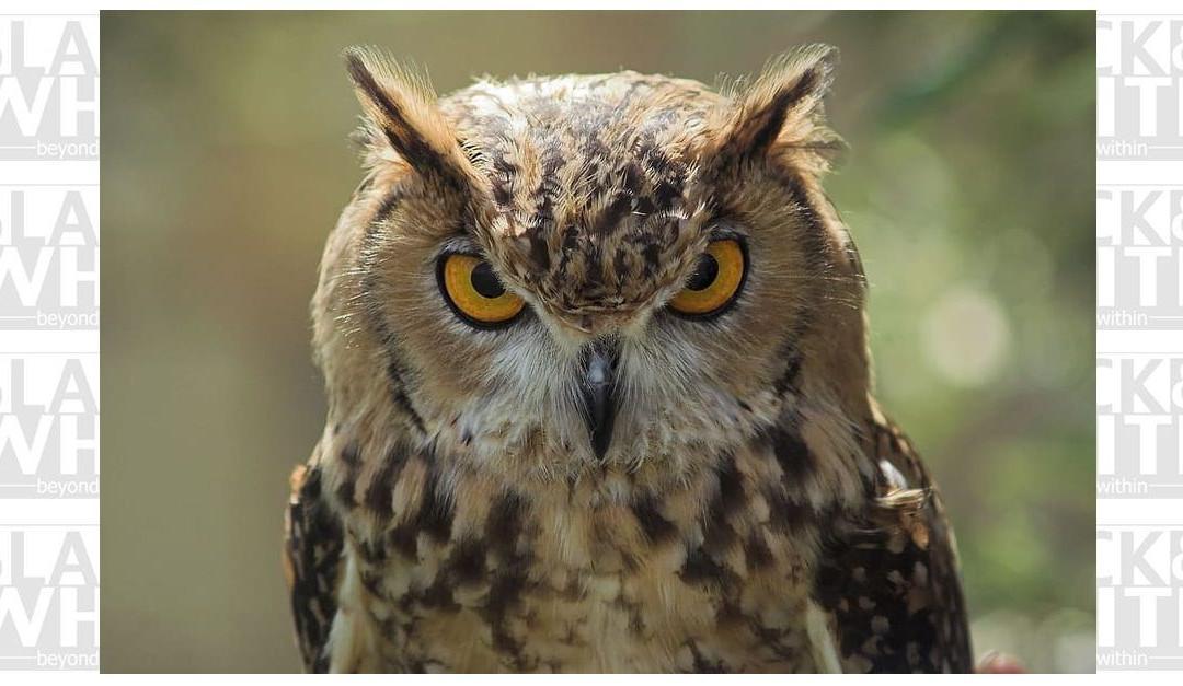 When it 'owls…