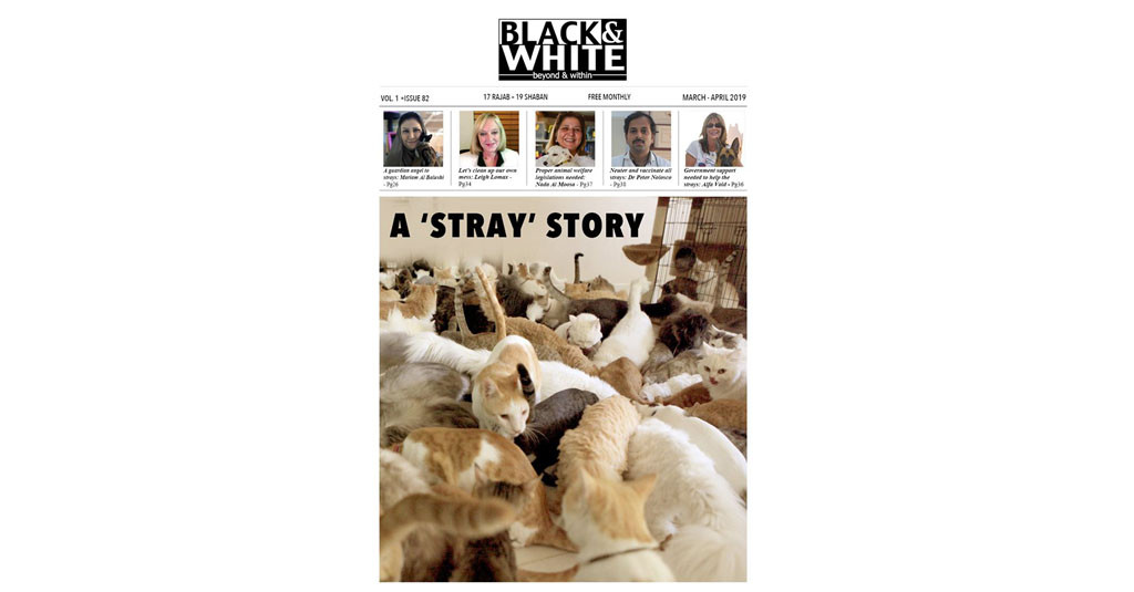 Issue-82-Stray-story-march-2019